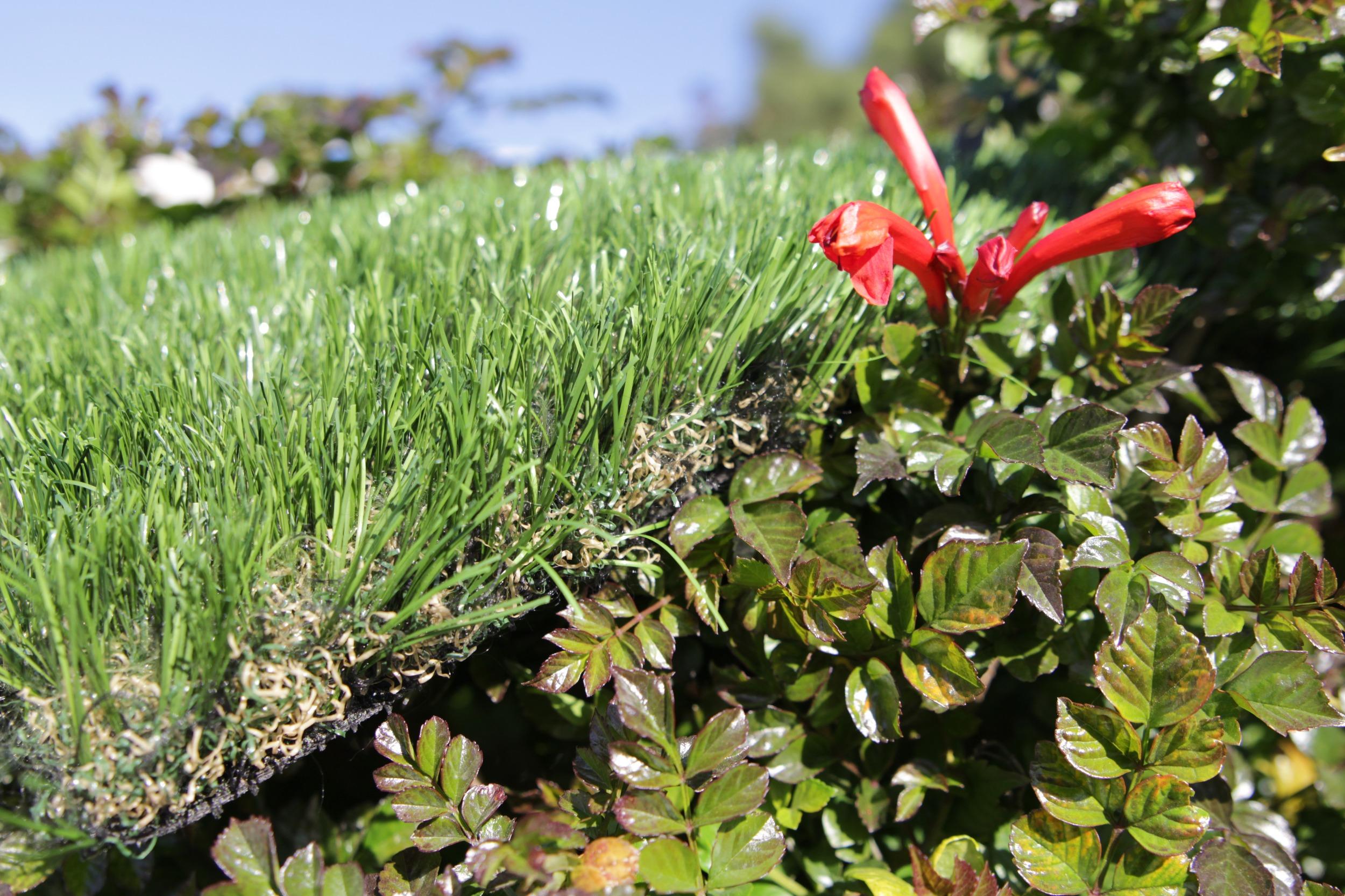 Artificial Grass Best Artificial Grass