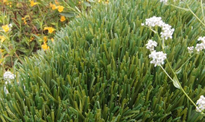 Double S-72 syntheticgrass Artificial Grass Columbus Ohio