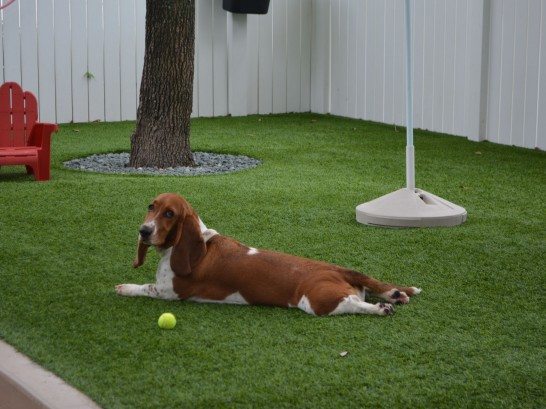 Artificial Grass Photos: Artificial Lawn Jackson, Ohio Artificial Turf For Dogs,  Dog Kennels